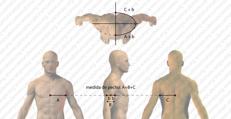 Proporciones del pecho masculino El octavo de pecho | Cómo cubrir un ...